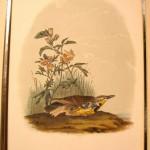 Audubon Missouri