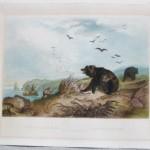 Bodmer Hunting Bear (1)